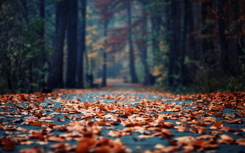 Autumn-Leaves-Road-Trees