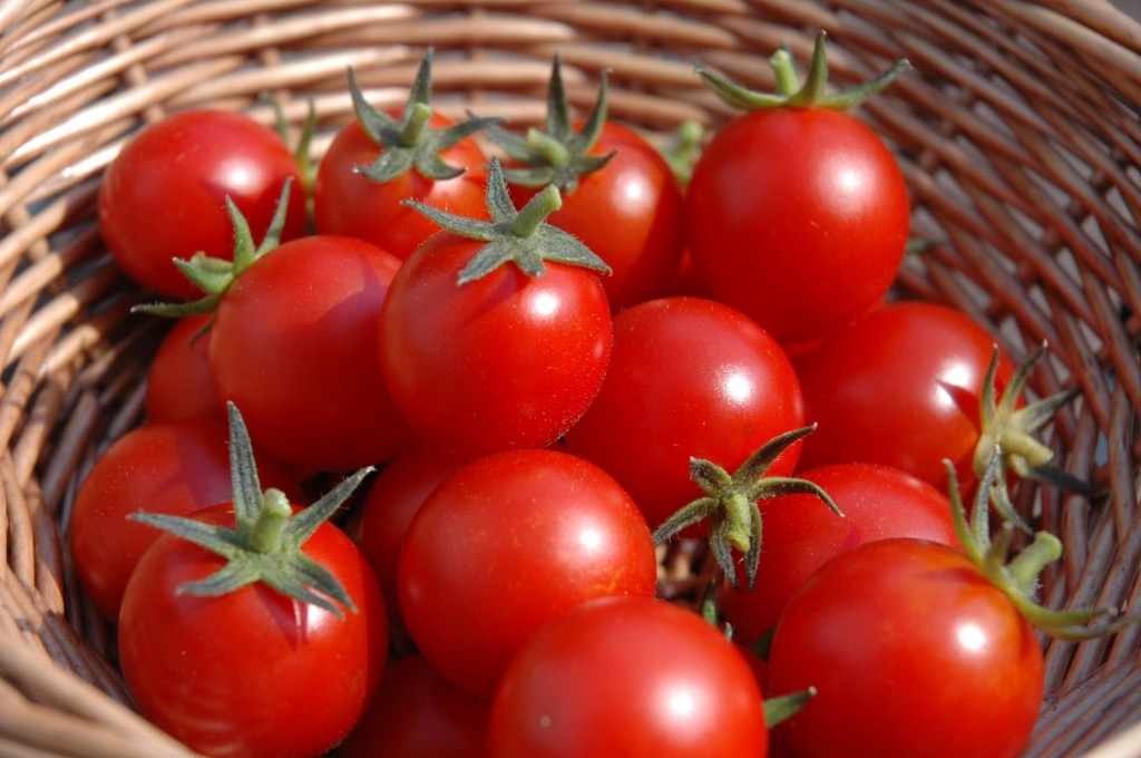 homegrown-tomatoes-basket
